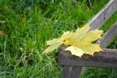 Herfst bladeren in het park. — Stockfoto