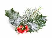 Holly leaves and berries with a pine branch on a white backgroun — Stock Photo