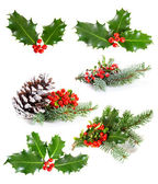 Set of   Holly leaves and berries with a pine branch on a white  — Stock Photo
