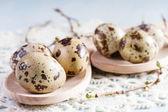 Quail eggs on wooden background closeup. — Stock Photo