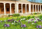Crocus flowers near Trinkhalle. Baden-Baden. Germany. Europe — Stock Photo