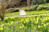 Spring landscape with crocuses and narcissus. — Stock Photo