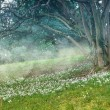 Spring landscape. Snowdrops in the meadow. — Stock Photo #71169641