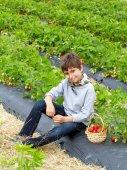 Chłopiec z zbiorów truskawek w koszu na polu — Zdjęcie stockowe