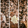 Set of abstract coffee banners. — Stock Photo #76013087