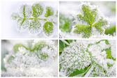 Thematic business card set or visiting card set. Hoarfrost on le — Stock Photo