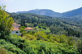 Olive orchards in the hills - Corfu, Greece — Stock Photo
