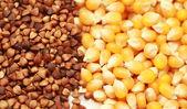Buckwheat isolated on white background — Stock Photo