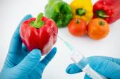 Man with gloves working with pepper in genetic engineering labor — Stock Photo