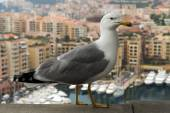 Seagull on a background of luxury Monaco — Stock Photo