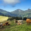 Rural landscape in the Swiss Alps — Stock Photo #56572097