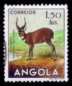 Sitatunga or marshbuck, antelope — Stock Photo
