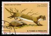 Least weasel (Mustela nivalis) — Stock Photo
