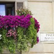 Italian balcony decorated with flowers petunias — Stock Photo #63459879
