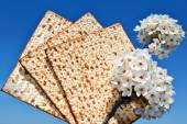 Branch of a blossoming tree and matzo — Stock Photo