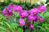 Orchid by fuchsia color — Stok fotoğraf