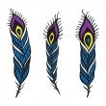 Peacock Feather set. — Stock Vector #53394205