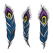 Peacock Feather set. — Stock Vector