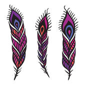 Peacock Feather set. — Vettoriale Stock