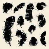 Beautiful Vintage Feathers — Stock Vector