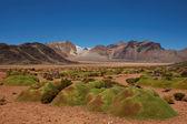 Cushion Plants in the Atacama — Stock Photo