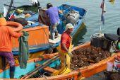 Fishermen Unloading Pyura Chilensis — Stock Photo