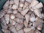 Sea shell grouping — Stock Photo