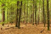 Waldweg — Stockfoto