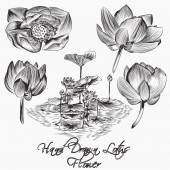 Collection of vector hand drawn vector lotus  flowers — Stock Vector