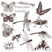 Collection of vector detailed insects for design — Stock Vector