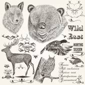 Collection of vector hand drawn animals hunting season design — Vector de stock
