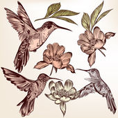 Collection of vector  hand drawn hummingbirds and flowers — Stock Vector