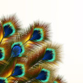 Fashion background with peacock feathers — Stockvektor