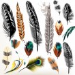 Постер, плакат: Set of vector realistic colorful feathers