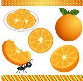 Orange Digital Clipart — Stock Vector