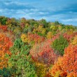Cut River Autumn Color — Stock Photo #55302025