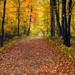 Walk in the Autumn Wood — Stock Photo #55936675