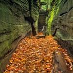 Hidden Passageway — Stock Photo #55936681
