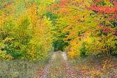 Autumn Two Track — Stock Photo