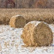 Snowy Cornstalk Bales — Stock Photo #59541775