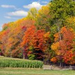 Autumn Trees and Cornfield — Stock Photo #66453117