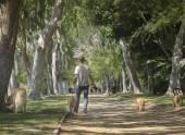 Beverly Hills, Ca, Abd, 2 Haziran 2015 güzel ağaç Beve kaplı — Stok fotoğraf