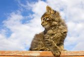 Kitten on fence — Stock Photo