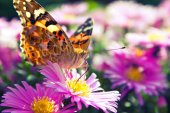 Butterfly in garden — Stock Photo