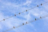 Birds on wire — Stock Photo