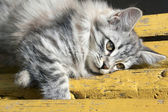 Cute kitten lying on bench — Stock Photo