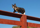 Beautiful three-color kitten on a fence — Stock Photo