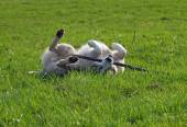 Dog  plays with a stick on to the green meadow — Stock Photo