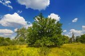 Green summer forest glade — Stock Photo