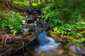 Small brook in a forest — Stock Photo